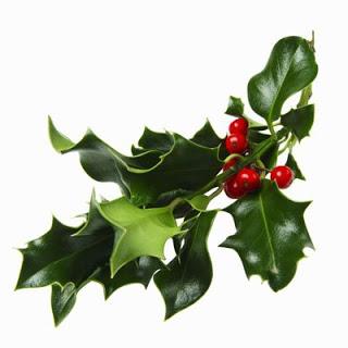 sprig_mistletoe